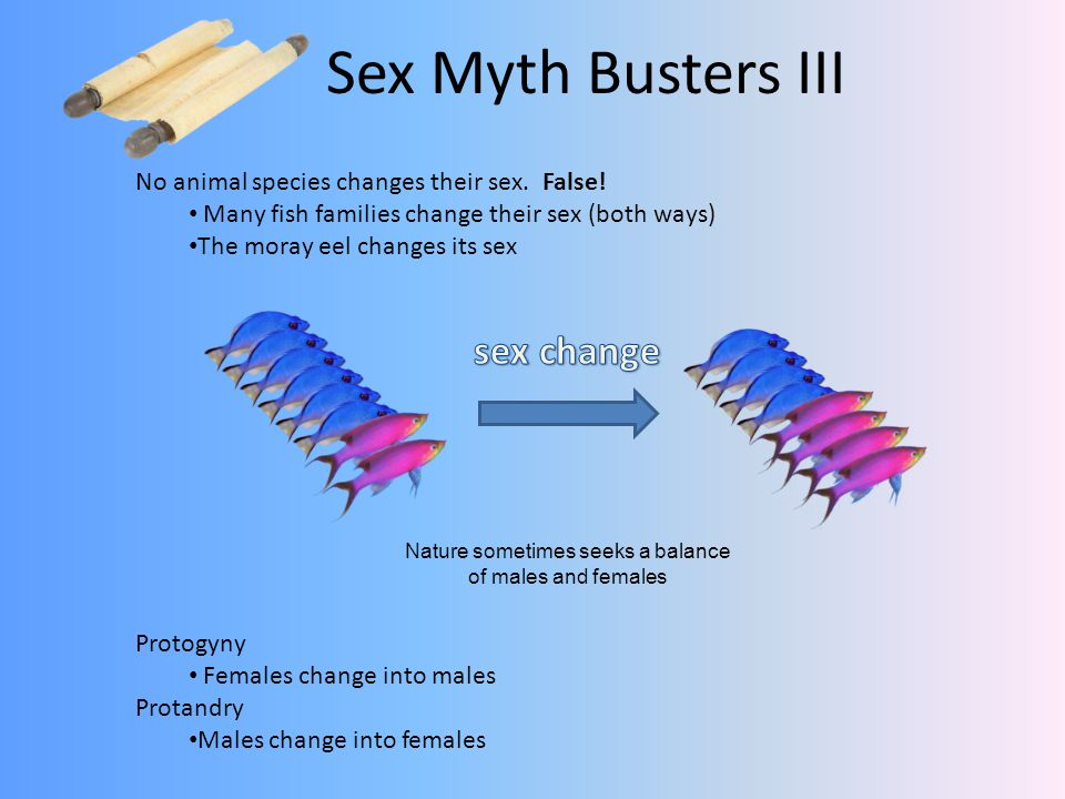 Nature sometimes seeks a balance of males and females Protogyny Females change into males Protandry Males change into females Sex Myth Busters III No animal species changes their sex.