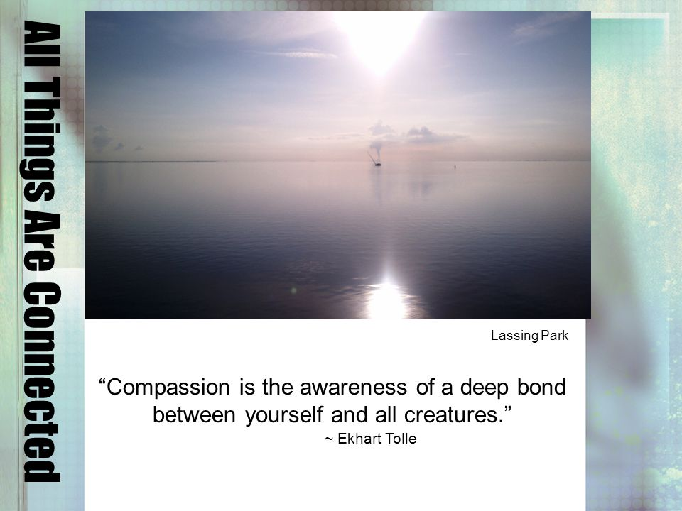All Things Are Connected Compassion is the awareness of a deep bond between yourself and all creatures.