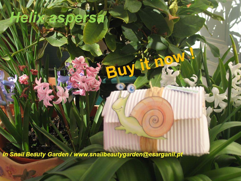 In Snail Beauty Garden / www.snailbeautygarden@esarganil.pt Helix aspersa B u y i t n o w !