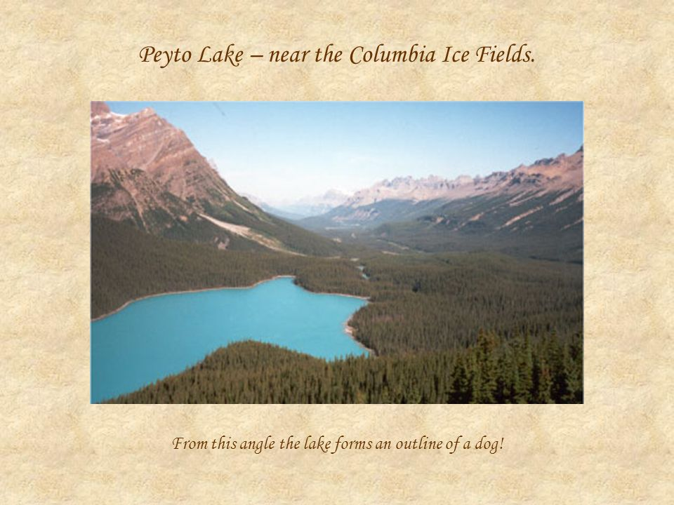 Peyto Lake – near the Columbia Ice Fields. From this angle the lake forms an outline of a dog!