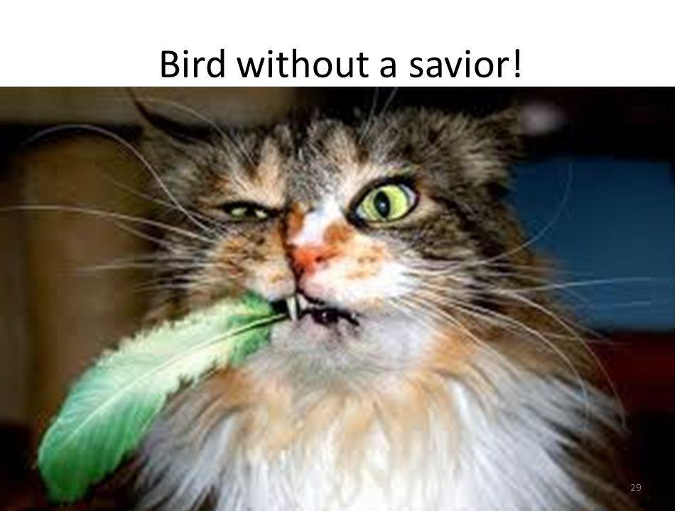 Bird without a savior! 29