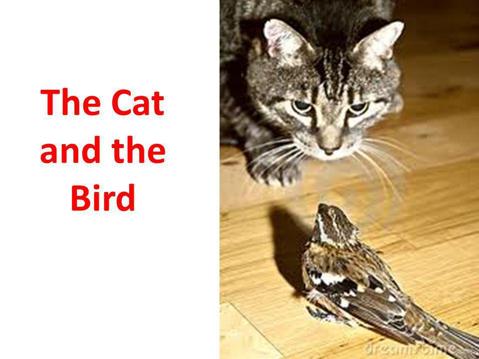The Cat and the Bird 3
