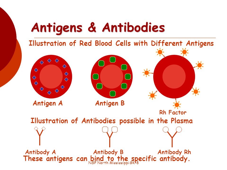 NSF North Mississippi GK-8 Illustration of Red Blood Cells with Different Antigens Antigens & Antibodies Antigen AAntigen B Rh Factor Illustration of Antibodies possible in the Plasma Antibody A Antibody Rh Antibody B These antigens can bind to the specific antibody.