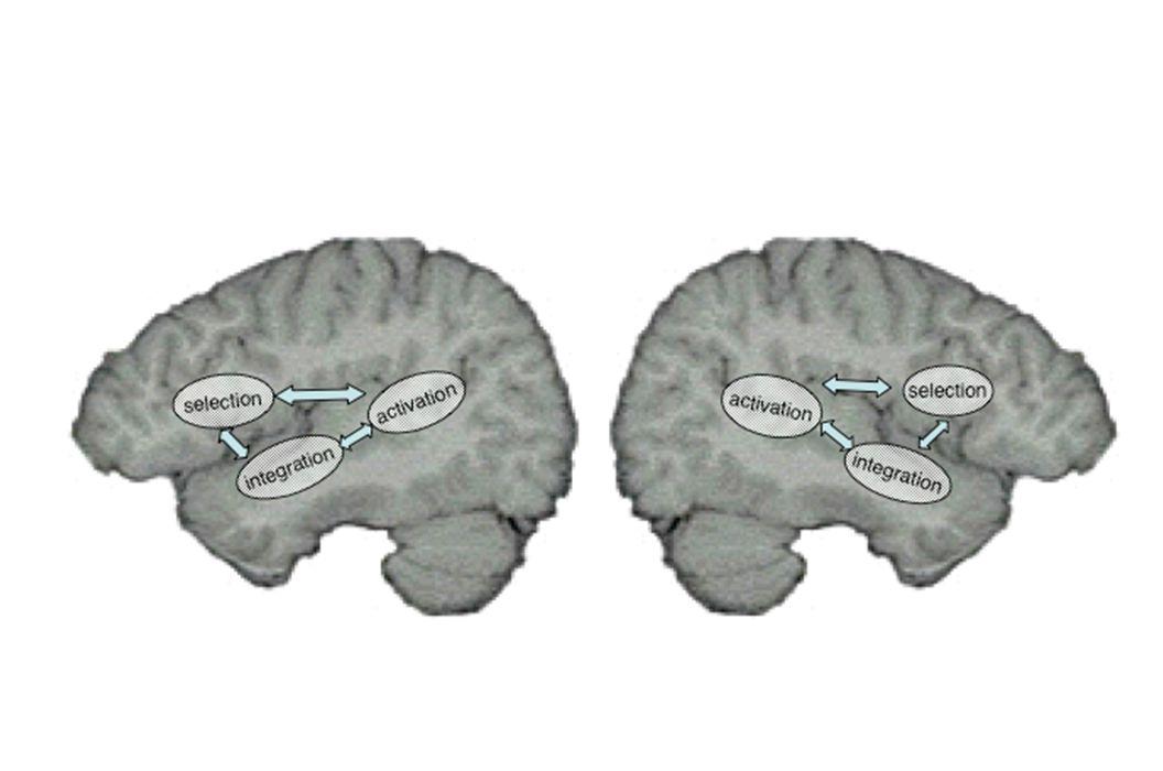 Right visual field Left Hemisphere Right Hemisphere Left visual field
