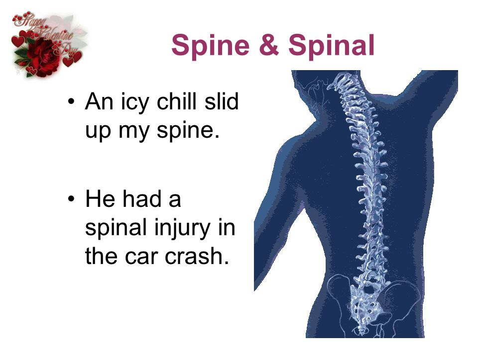 Spine & Spinal An icy chill slid up my spine. He had a spinal injury in the car crash.