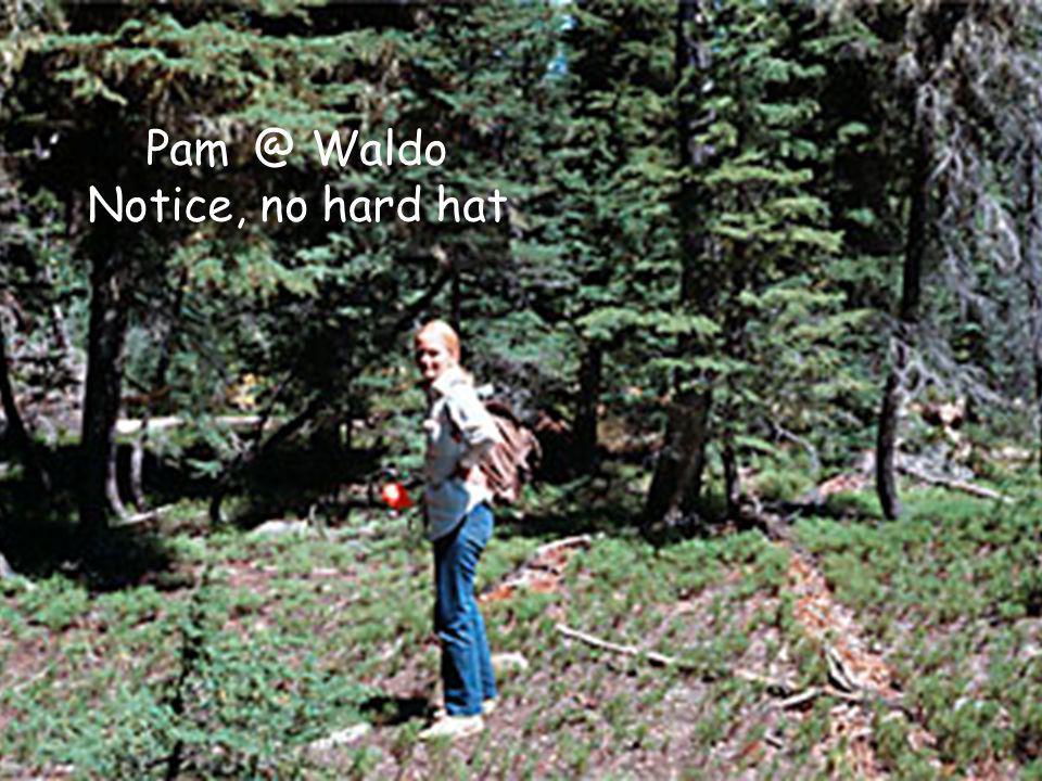 Pam @ Waldo Notice, no hard hat