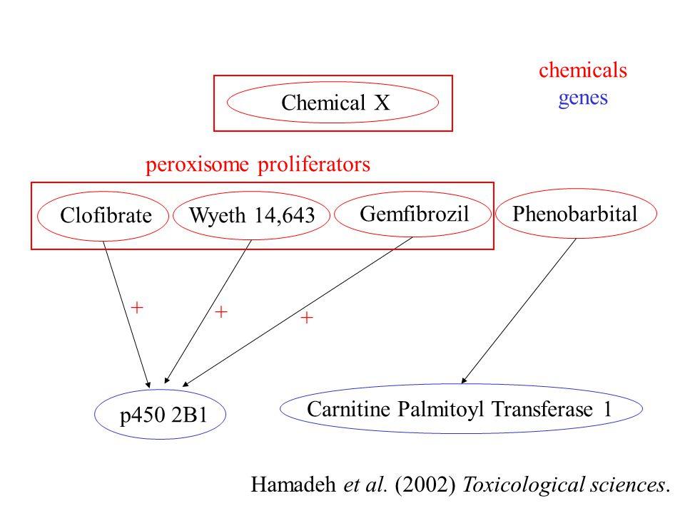 ClofibrateWyeth 14,643 GemfibrozilPhenobarbital p450 2B1 Carnitine Palmitoyl Transferase 1 Chemical X + + + peroxisome proliferators Hamadeh et al. (2