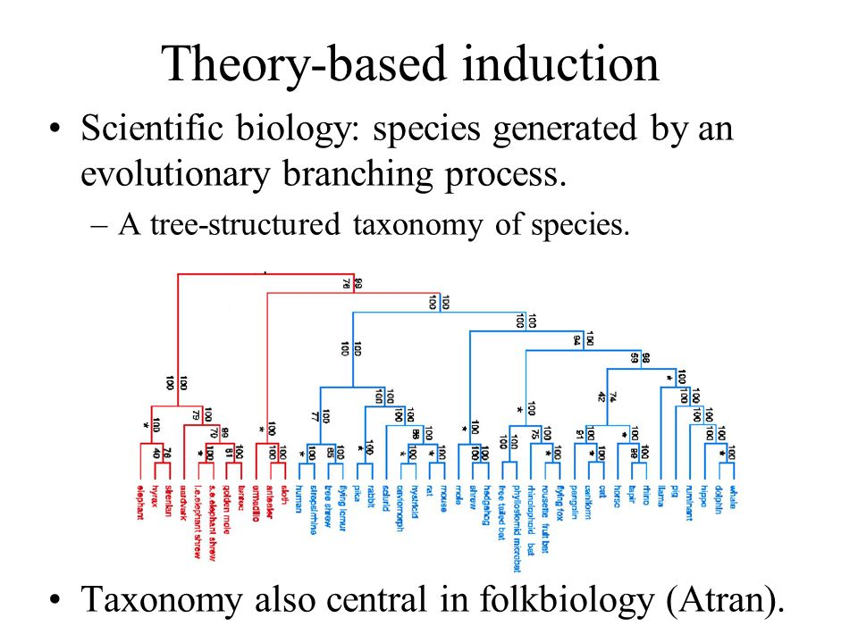 Scientific biology: species generated by an evolutionary branching process. –A tree-structured taxonomy of species. Taxonomy also central in folkbiolo