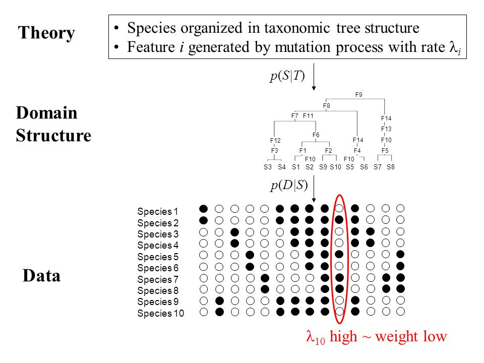 Domain Structure Theory Species organized in taxonomic tree structure Feature i generated by mutation process with rate i Species 1 Species 2 Species