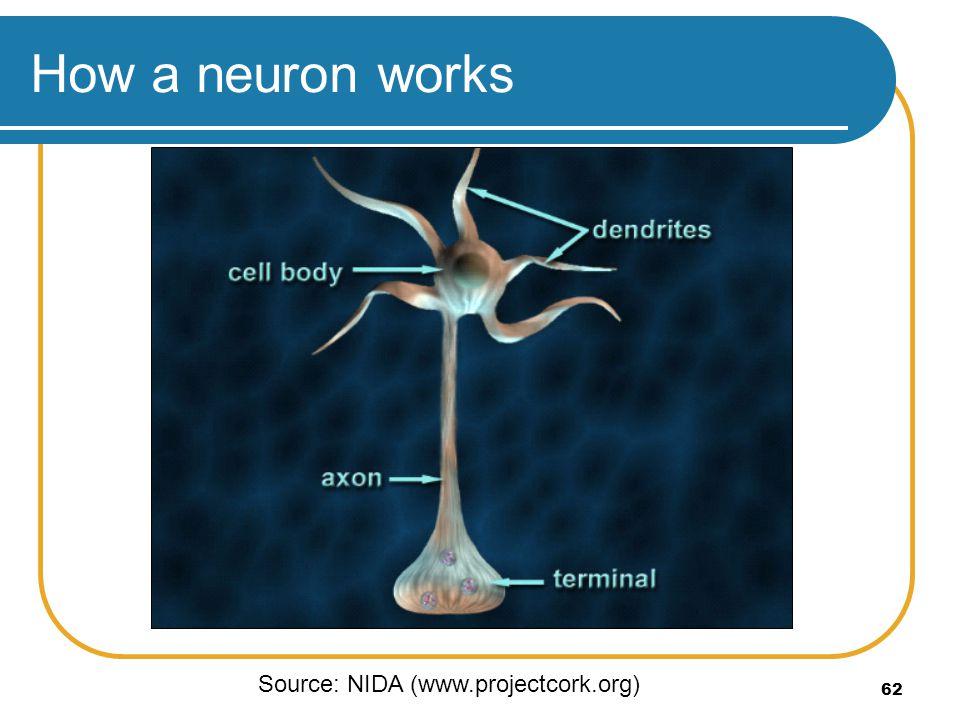 62 How a neuron works Source: NIDA (www.projectcork.org)