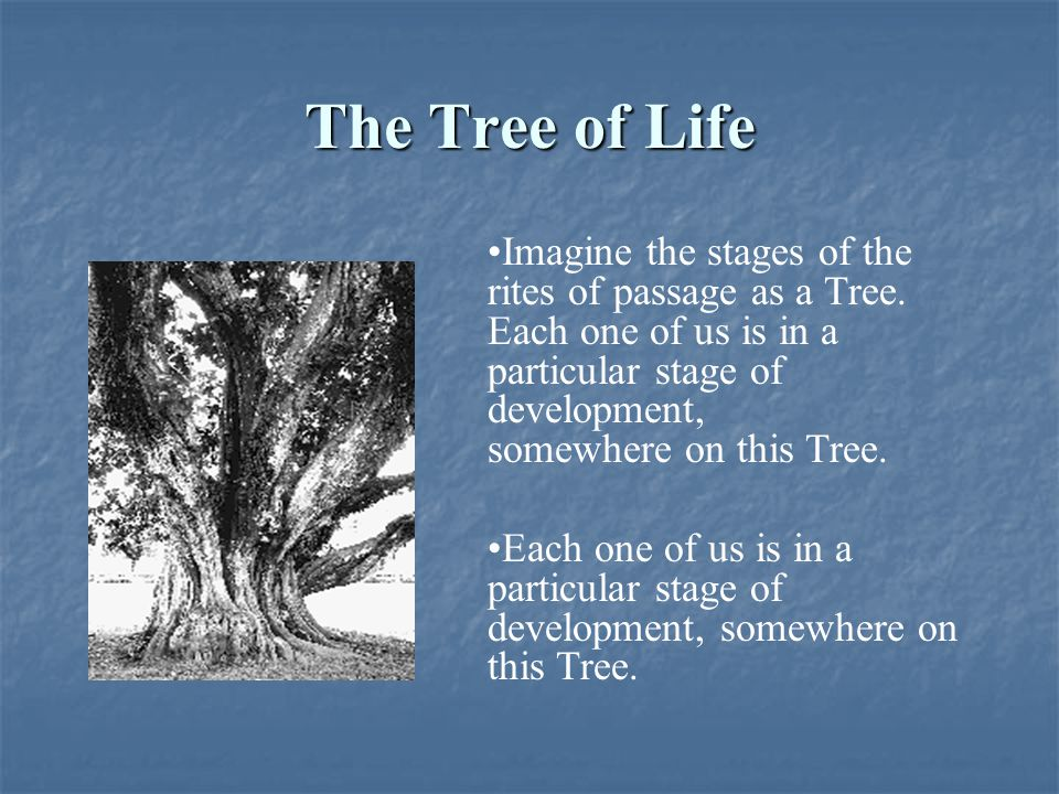 The Tree of Life Imagine the stages of the rites of passage as a Tree. Each one of us is in a particular stage of development, somewhere on this Tree.