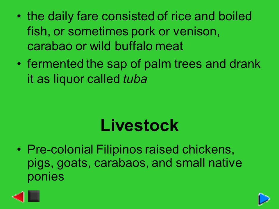 the daily fare consisted of rice and boiled fish, or sometimes pork or venison, carabao or wild buffalo meat fermented the sap of palm trees and drank it as liquor called tuba Livestock Pre-colonial Filipinos raised chickens, pigs, goats, carabaos, and small native ponies