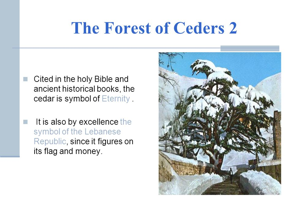 The Forest of Ceders 2 Cited in the holy Bible and ancient historical books, the cedar is symbol of Eternity. It is also by excellence the symbol of t