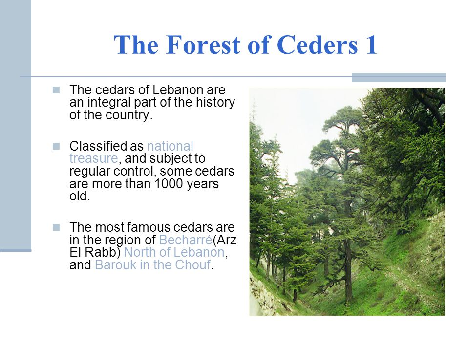 The Forest of Ceders 1 The cedars of Lebanon are an integral part of the history of the country.