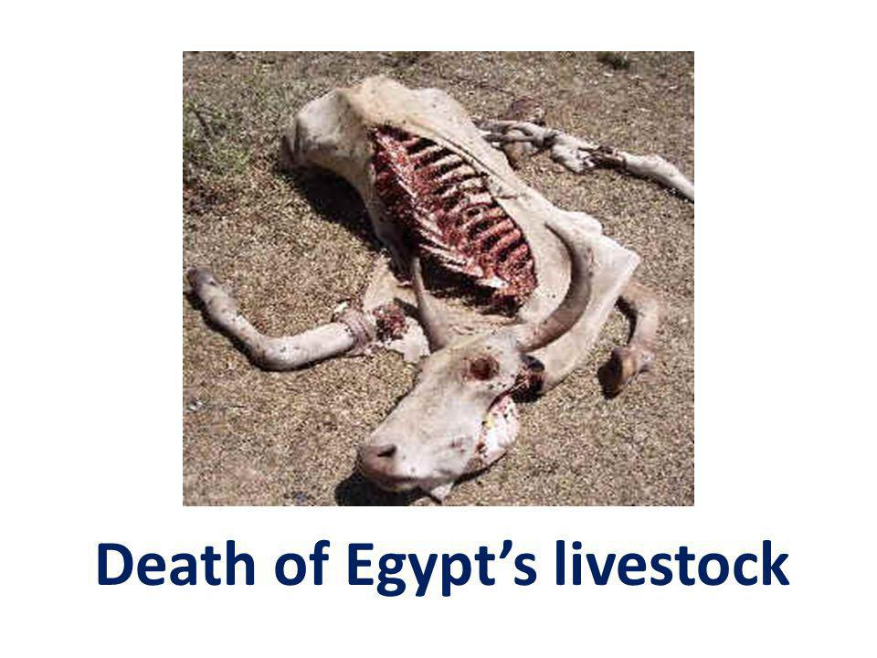 Death of Egypts livestock