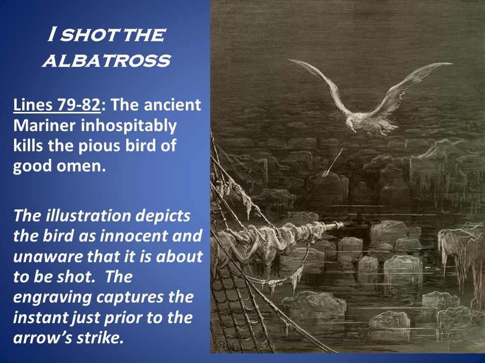 I shot the albatross Lines 79-82: The ancient Mariner inhospitably kills the pious bird of good omen. The illustration depicts the bird as innocent an