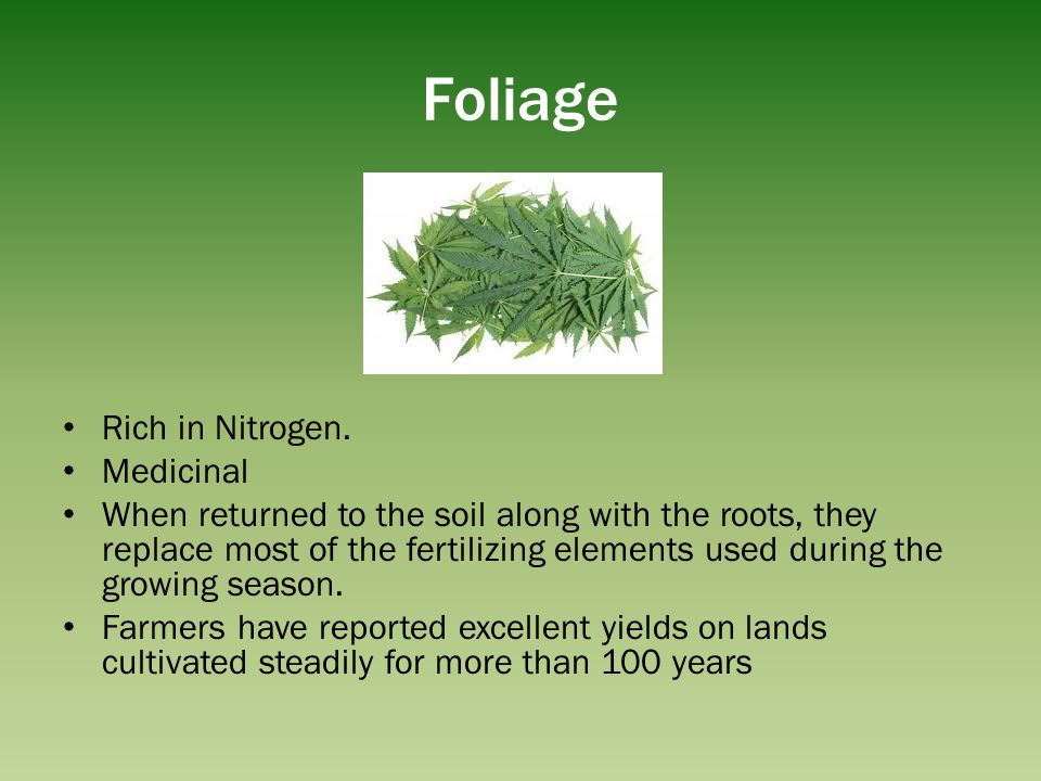Foliage Rich in Nitrogen. Medicinal When returned to the soil along with the roots, they replace most of the fertilizing elements used during the grow