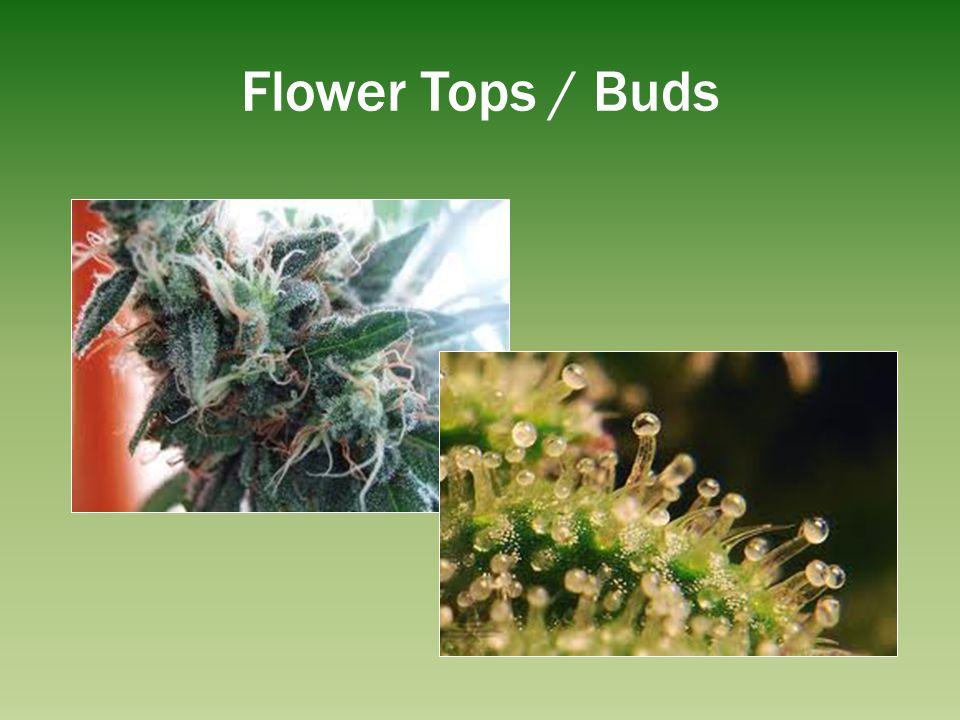 Flower Tops / Buds