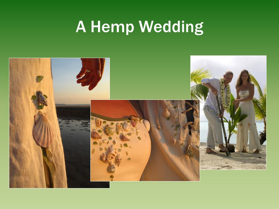 Inner Stem / Core Woody fiber, hurds & pulp (77% cellulose) Paper, packing material, fiberboard o 4X more productive than trees per acre o Hemp does not require sulphur based acids, dioxins and 2000 toxic chlorinated organic compounds to be made into paper o Hemp paper can be recycled many more times o Hemp paper wont turn yellow, resistant to insects & mildew SUSTAINABLE (6 months vs.
