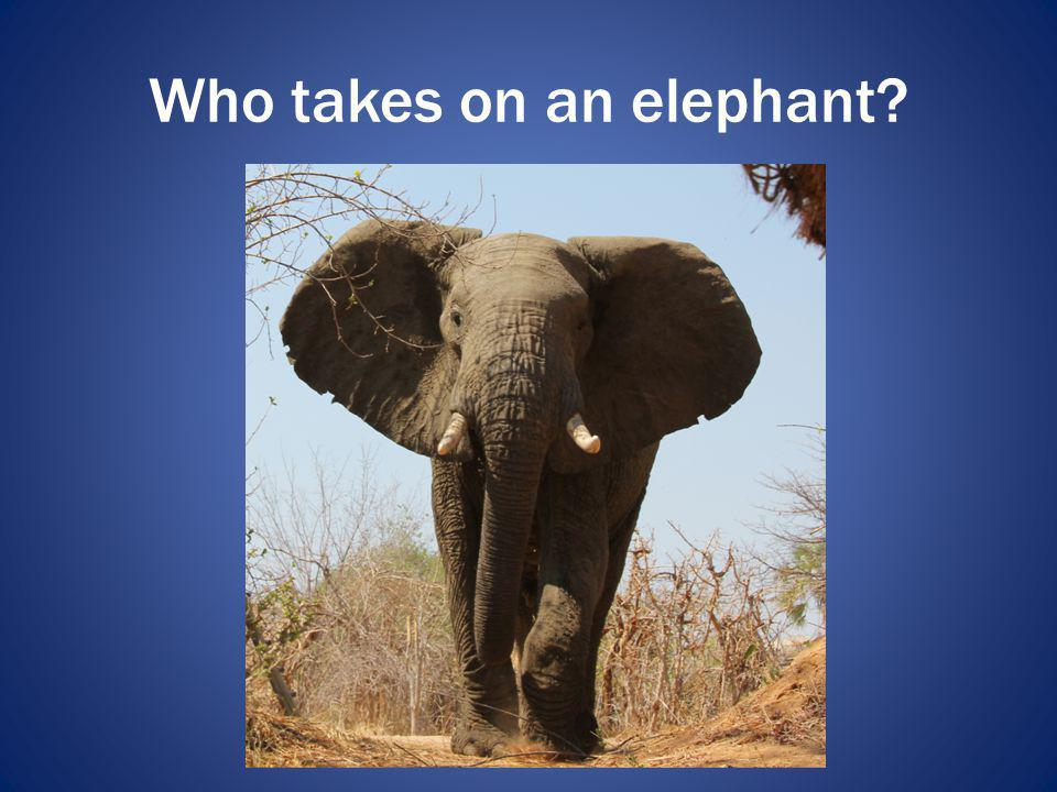 Who takes on an elephant?