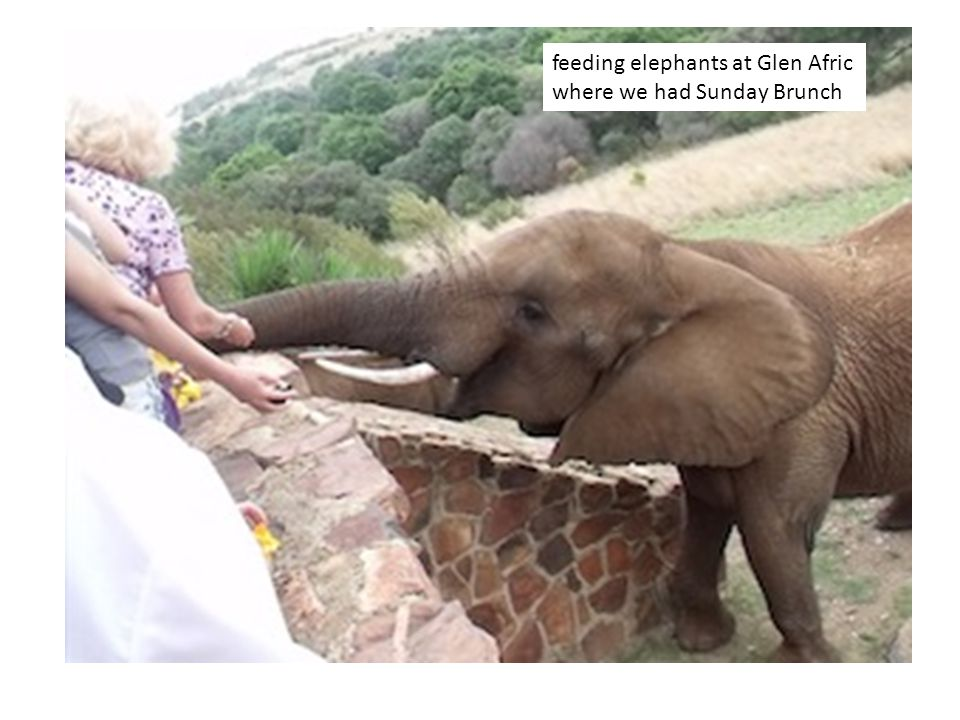 feeding elephants at Glen Afric where we had Sunday Brunch