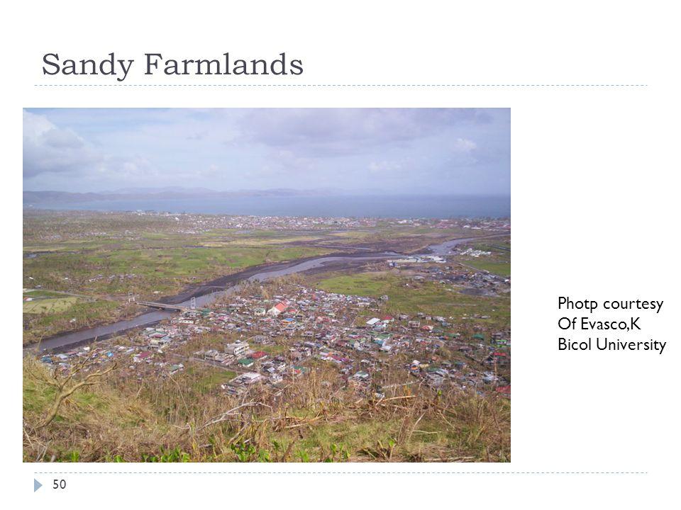 Sandy Farmlands Photp courtesy Of Evasco,K Bicol University 50