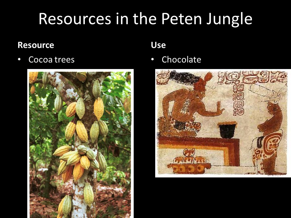 Resources in the Peten Jungle Resource Cocoa trees Use Chocolate