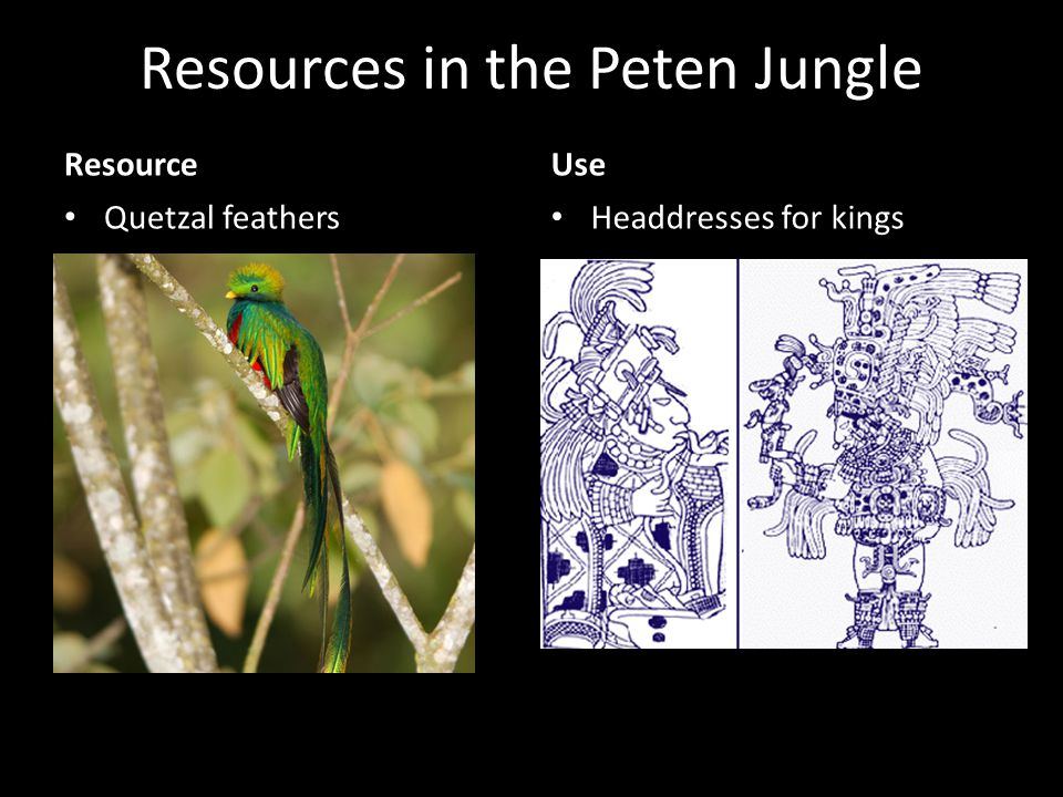 Resources in the Peten Jungle Resource Quetzal feathers Use Headdresses for kings