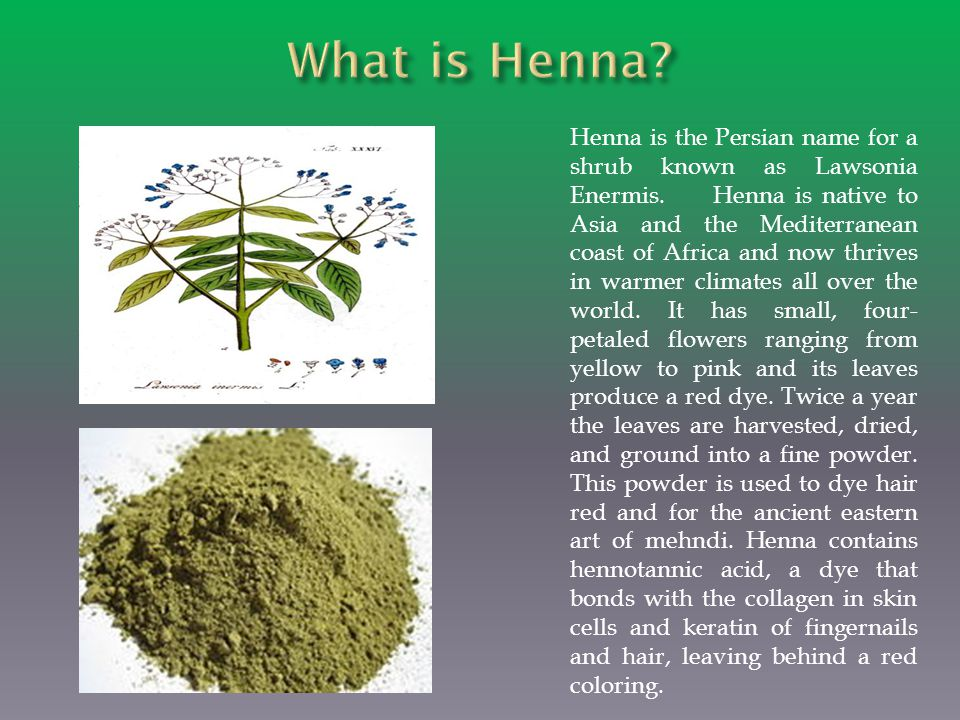 The henna plant is one of the oldest cosmetics ever used and is extremely safe.