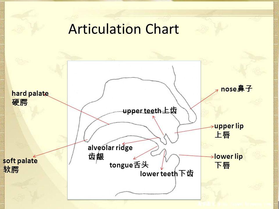 Articulation Chart upper lip lower lip upper teeth lower teeth nose tongue alveolar ridge hard palate soft palate