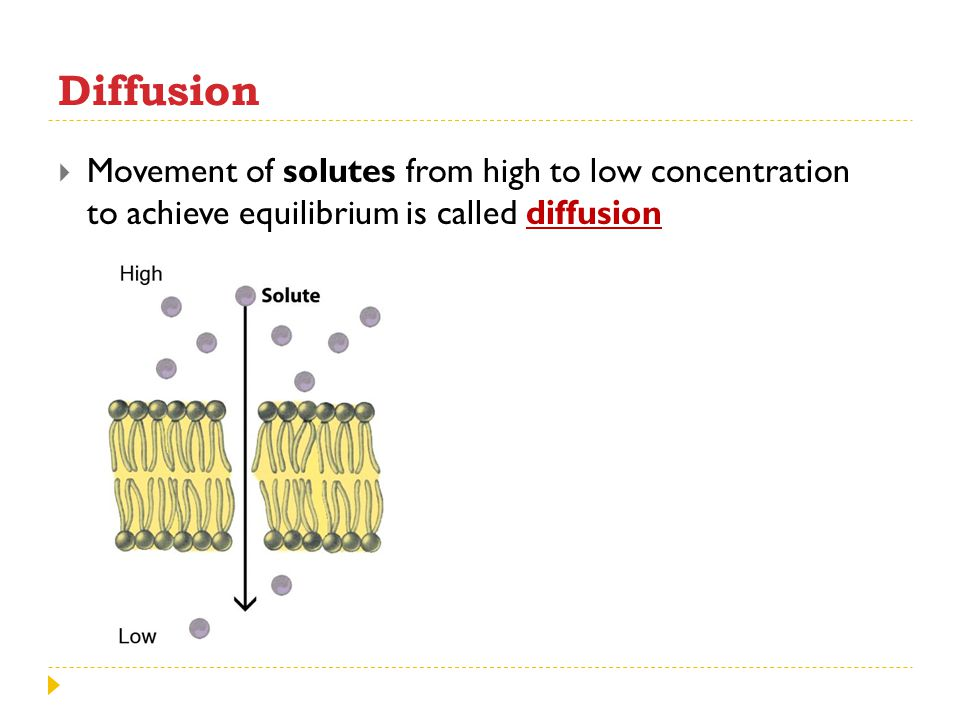 Diffusion Movement of solutes from high to low concentration to achieve equilibrium is called diffusion