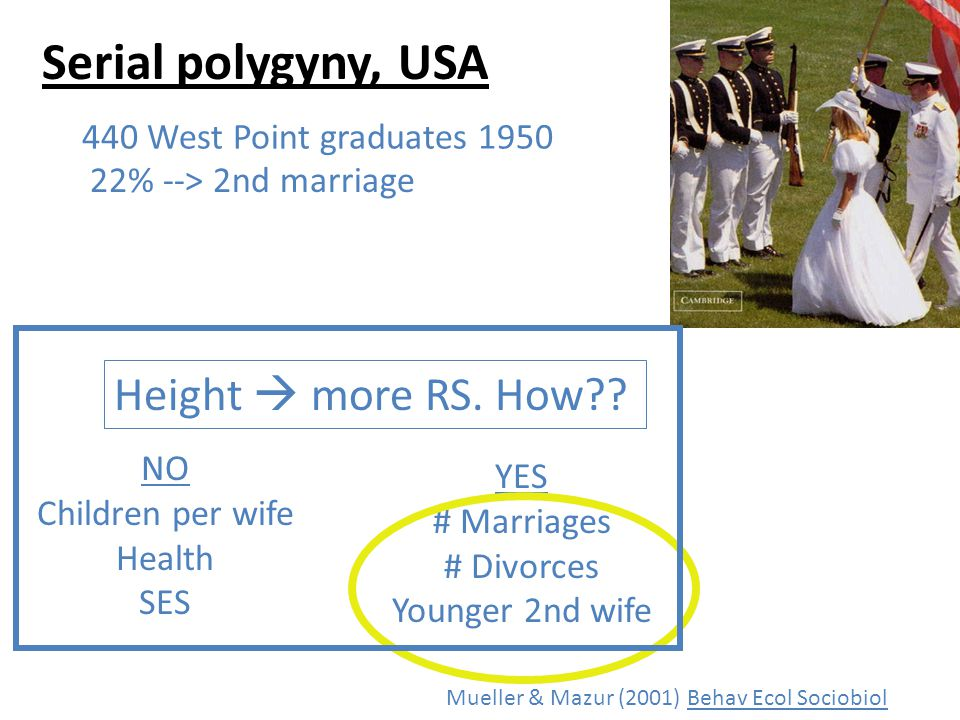Serial polygyny, USA Mueller & Mazur (2001) Behav Ecol Sociobiol 440 West Point graduates 1950 22% --> 2nd marriage NO Children per wife Health SES YES # Marriages # Divorces Younger 2nd wife Height more RS.