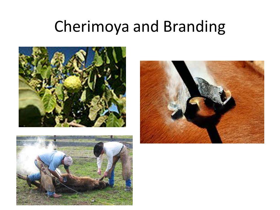 Cherimoya and Branding