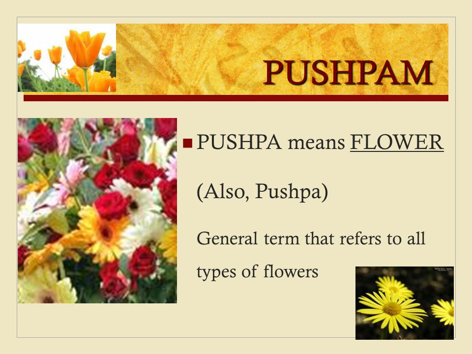 PUSHPAM PUSHPA means FLOWER (Also, Pushpa) General term that refers to all types of flowers