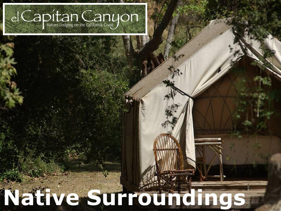 Native Surroundings