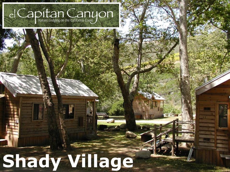 Shady Village