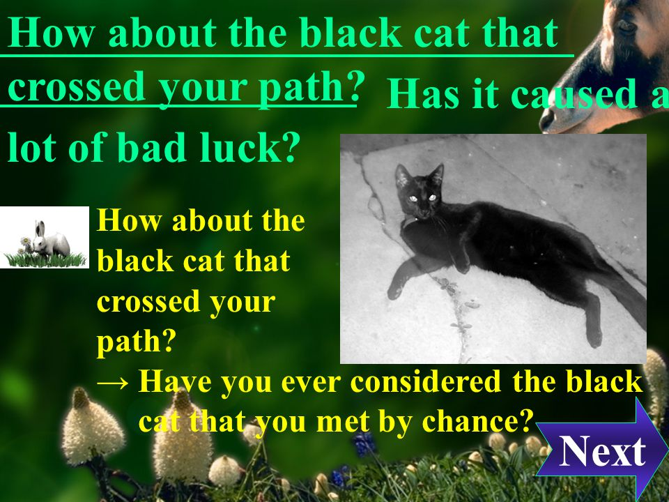 Now, are you superstitious. Do you have a rabbit s foot in your pocket for luck.