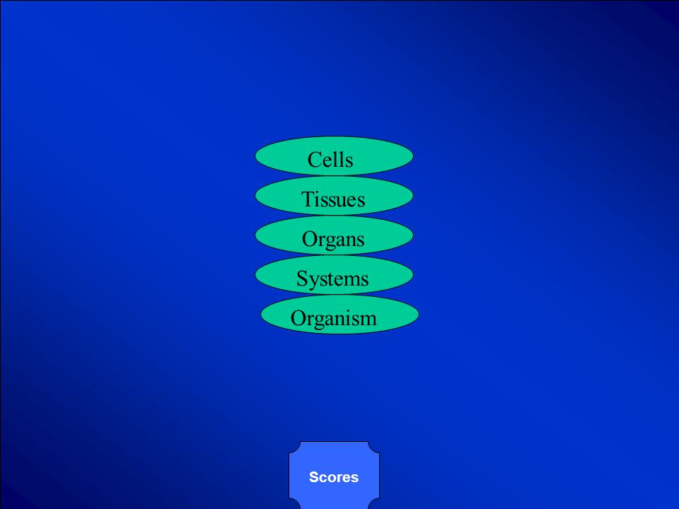 © Mark E. Damon - All Rights Reserved Complete this chart showing how cells are organized.