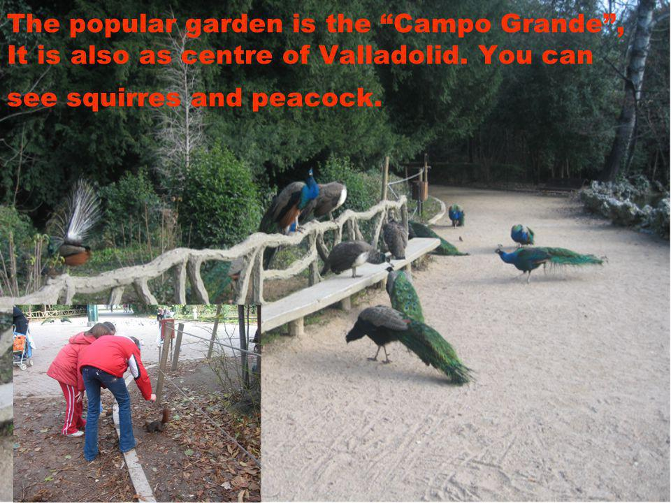 The popular garden is the Campo Grande, It is also as centre of Valladolid.