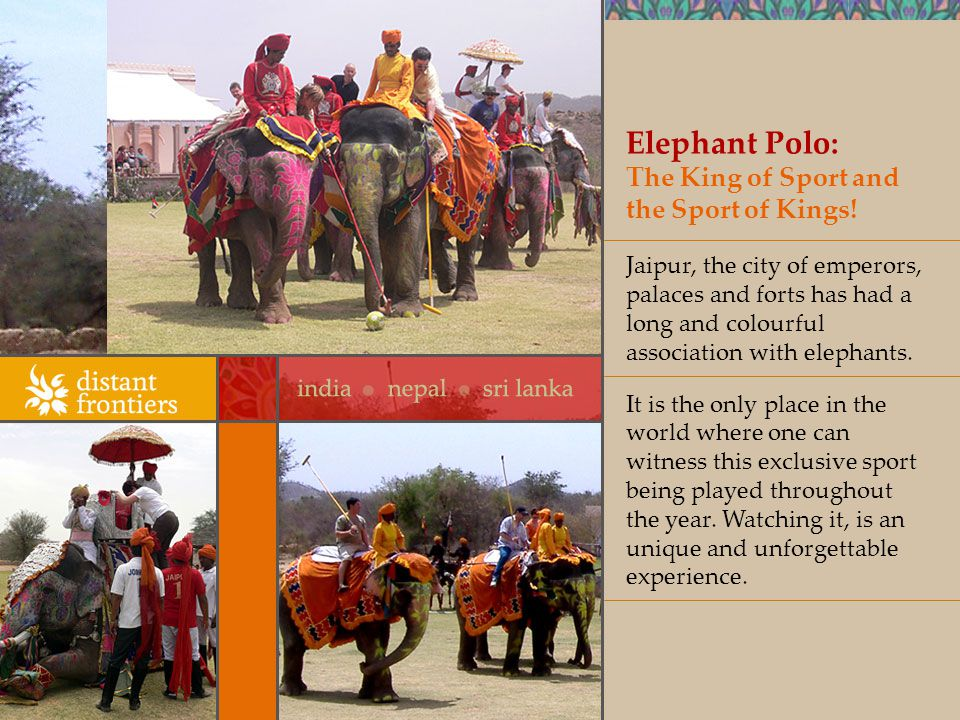 Elephant Polo: The King of Sport and the Sport of Kings.