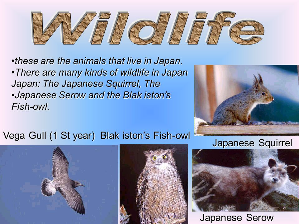 these are the animals that live in Japan.these are the animals that live in Japan.