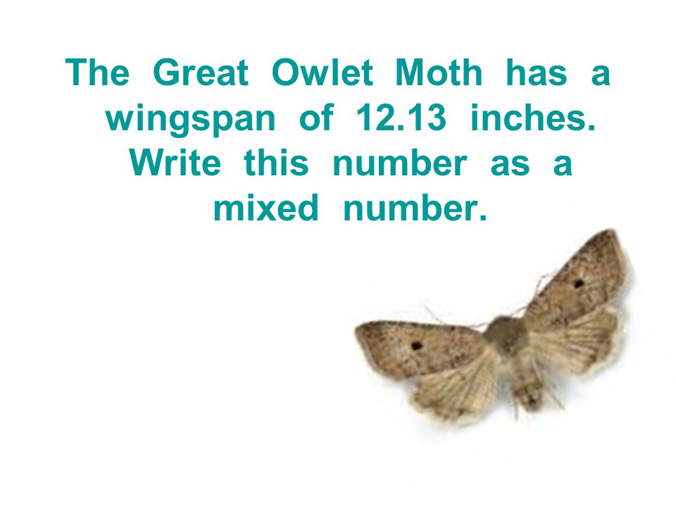 The Great Owlet Moth has a wingspan of 12.13 inches. Write this number as a mixed number.