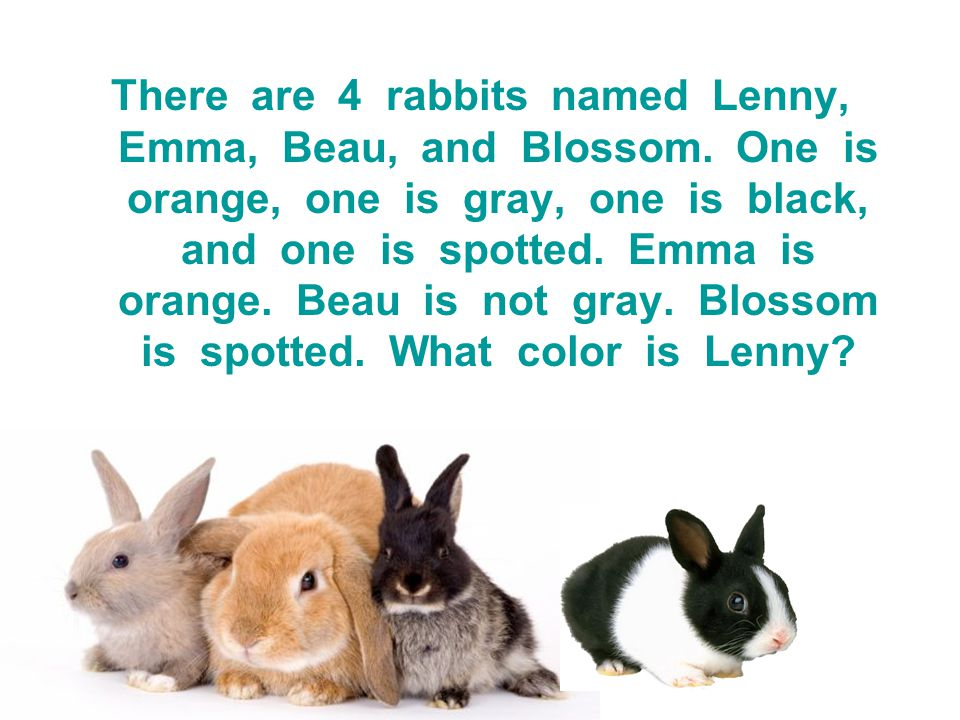 There are 4 rabbits named Lenny, Emma, Beau, and Blossom. One is orange, one is gray, one is black, and one is spotted. Emma is orange. Beau is not gr
