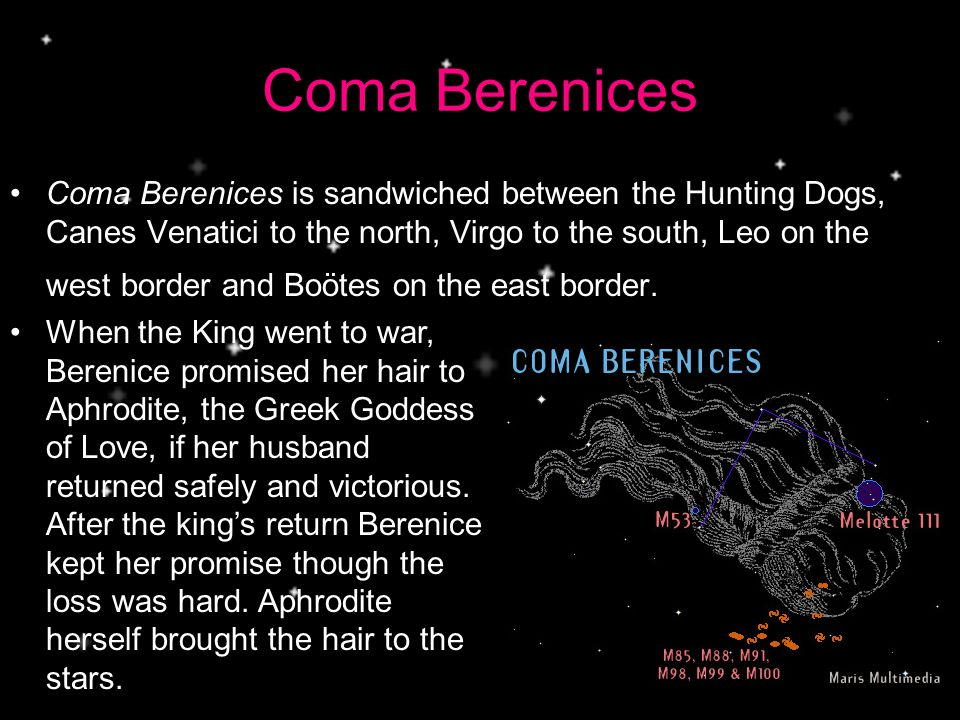Coma Berenices Coma Berenices is sandwiched between the Hunting Dogs, Canes Venatici to the north, Virgo to the south, Leo on the west border and Boötes on the east border.