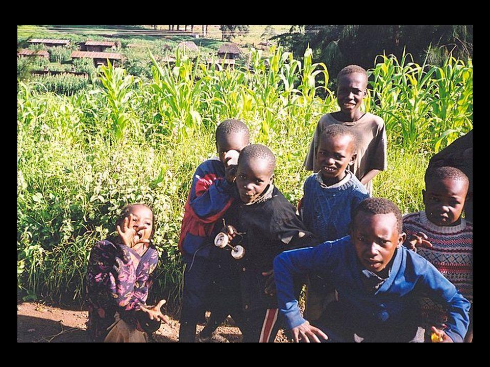 Kenya – on a tea plantation