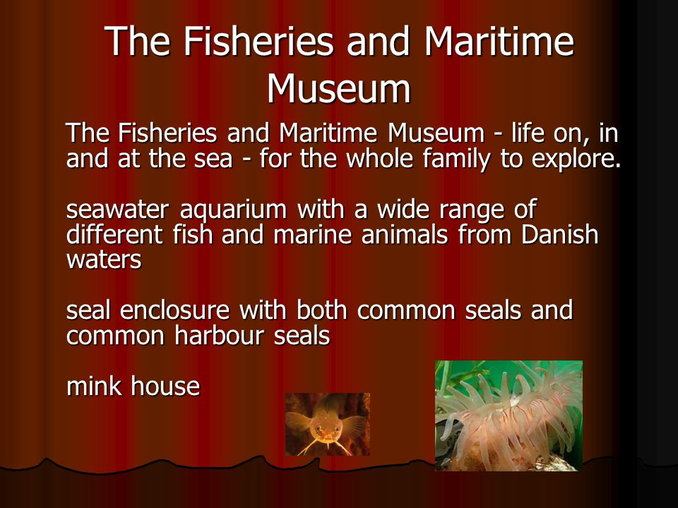 The Fisheries and Maritime Museum The Fisheries and Maritime Museum - life on, in and at the sea - for the whole family to explore.