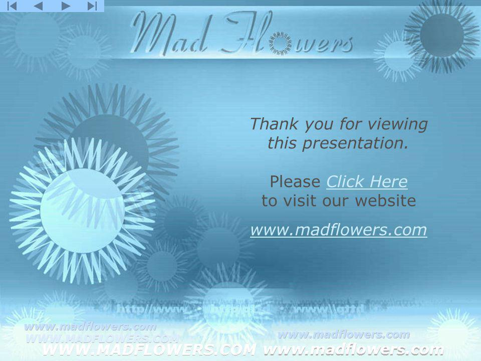 Click to edit Master title style Click to edit Master text styles –Second level Third level –Fourth level »Fifth level WWW.MADFLOWERS.COM www.madflowers.com WWW.MADFLOWERS.COM www.madflowers.com WWW.MADFLOWERS.COM www.madflowers.com WWW.MADFLOWERS.COM www.madflowers.com WWW.MADFLOWERS.COM www.madflowers.com Thank you for viewing this presentation.