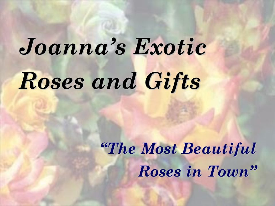 Joannas Exotic Roses and Gifts The Most Beautiful Roses in Town