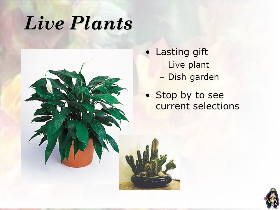 Live Plants Lasting gift –Live plant –Dish garden Stop by to see current selections
