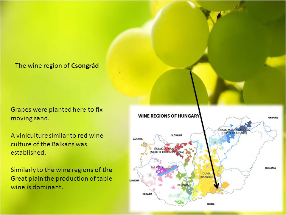 The wine region of Csongrád Grapes were planted here to fix moving sand.